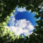tree circle1